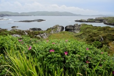 Along the Ring of Beara, near Allihies