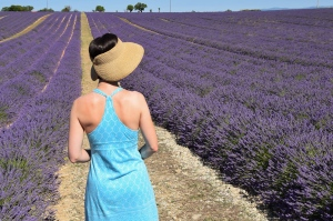 Lavender fields, Valensole, France - 2015