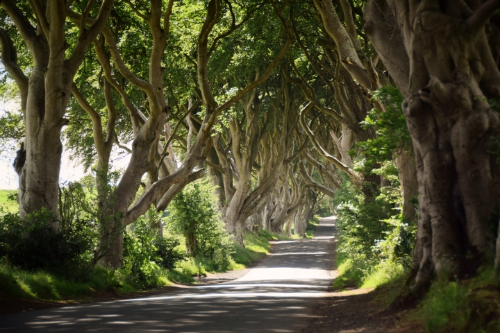 The Dark Hedges, Ireland - 2016