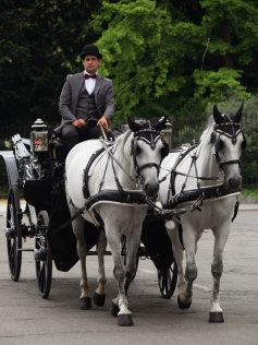 A dapper driver and his carriage.